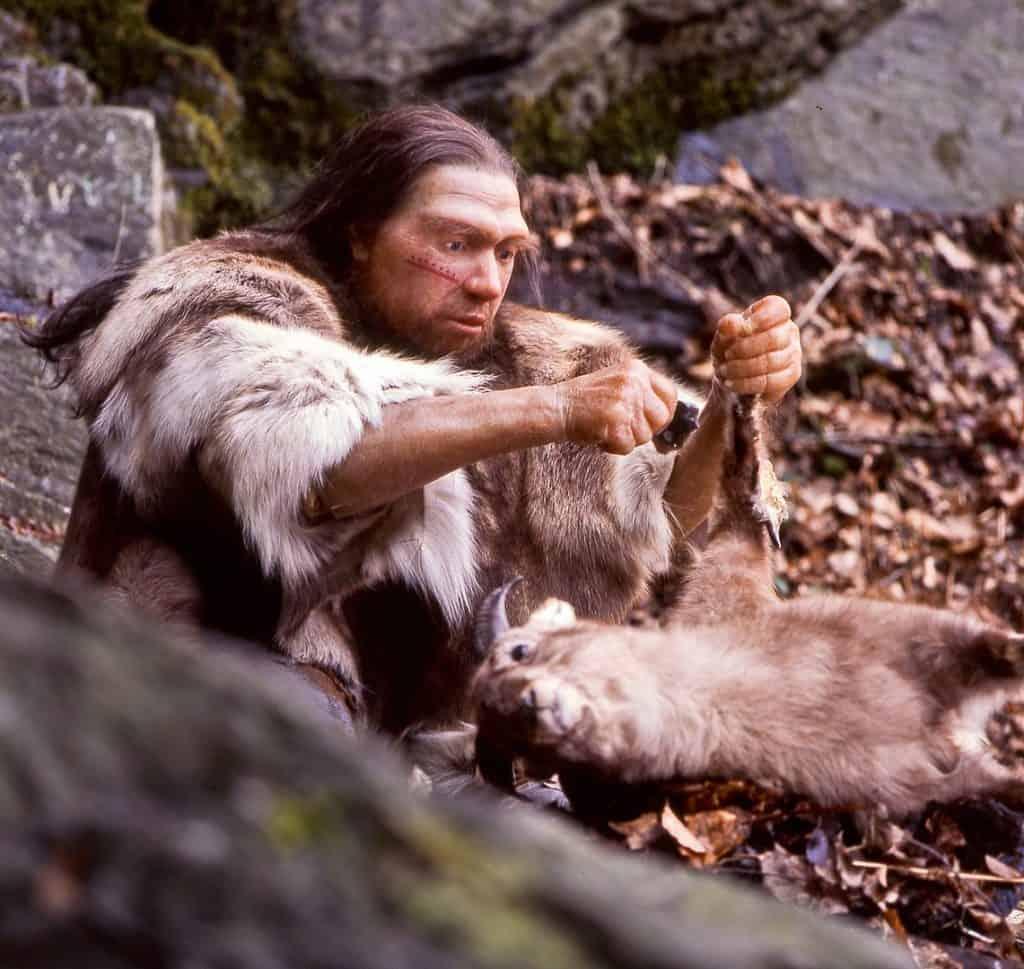 1141px Homo sapiens neanderthalensis Jaeger 1024x969 - Romeo & Julius am Freitag, 26.02.2021: Alles muss raus!