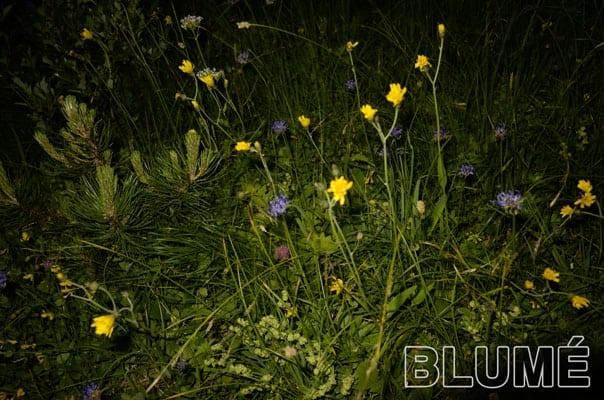 Blumeee - Romeo & Julius am Freitag, 29.6.: Outdoor-Spieleabend
