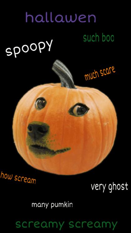 Halloween Pumpkin Meme - Romeo & Julius am 04.10.: Suppenküche