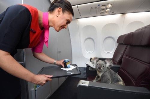koalala - Jungschwuppen Mittwochsclub am 13.11.19