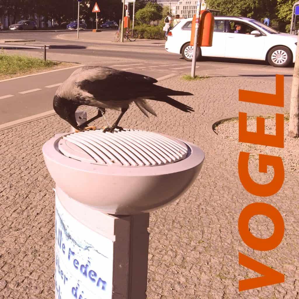 vogel 1024x1022 - Jungschwuppen Mittwochsclub am 9. Mai: Vater-Mutter-Herrentag